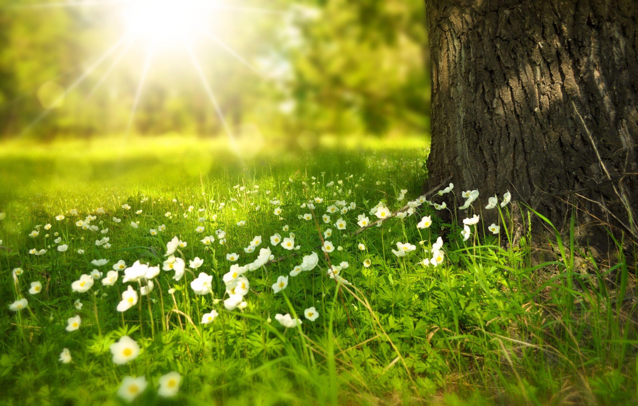 bloom-blossom-flora-60006