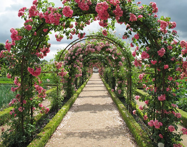 roses-2245612_640